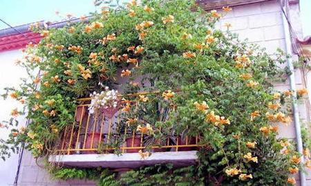جدیدترین روش های جلوگیری کردن دید همسایه به خانه