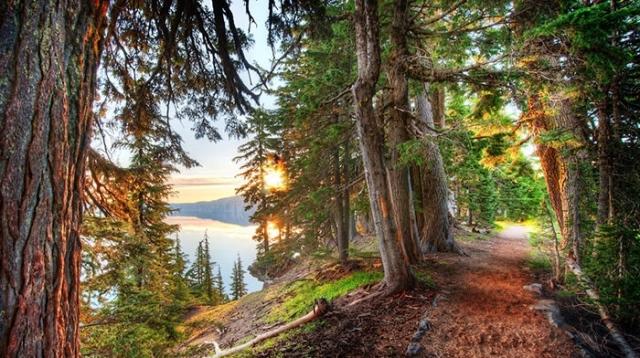 اموزش اصول زندگی از طبیعت