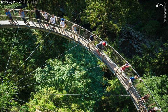 با صفاترین پل جهان بر روی جنگل های کانادا
