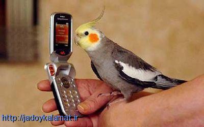 چگونه به طوطی حرف زدن بیاموزیم