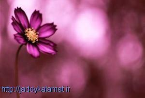 شخصیت شناسی بر اساس رایحه گل